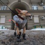 Опасны ли реагенты для домашних животных?
